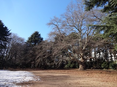 雪が残って