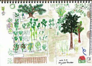 Miyake Garden  2016年7月