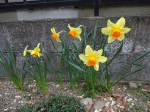 春の種まき