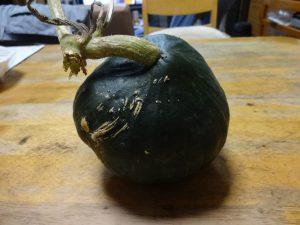 ひとつめのかぼちゃ収穫とカミキリムシの話